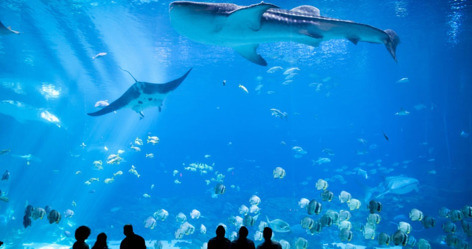 How to Pursue a Career as an Aquarist